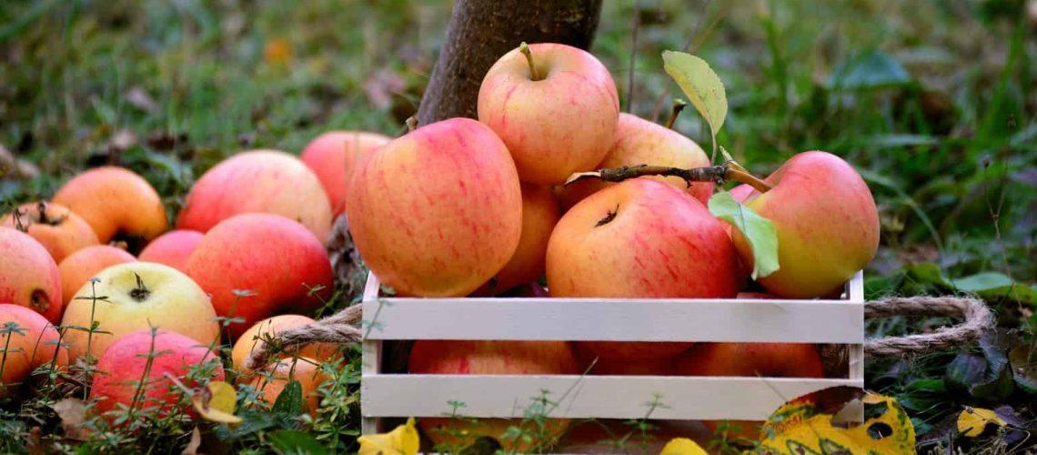 apple-3695288_1920